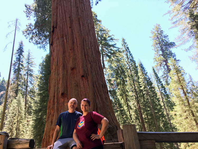 The General Sherman Tree in Sequoia National Park is the largest tree in the world by volume.